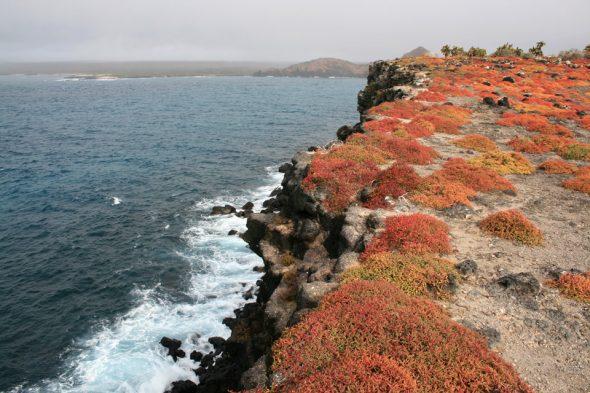 Isla Plaza Sur, Galapagos-Inseln