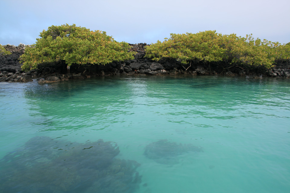 Die Galápagos-Inseln – ein Paradies der Vielfalt von Flora und Fauna
