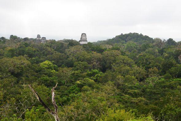 Blick über Tikal und den guatemaltekischen Urwald