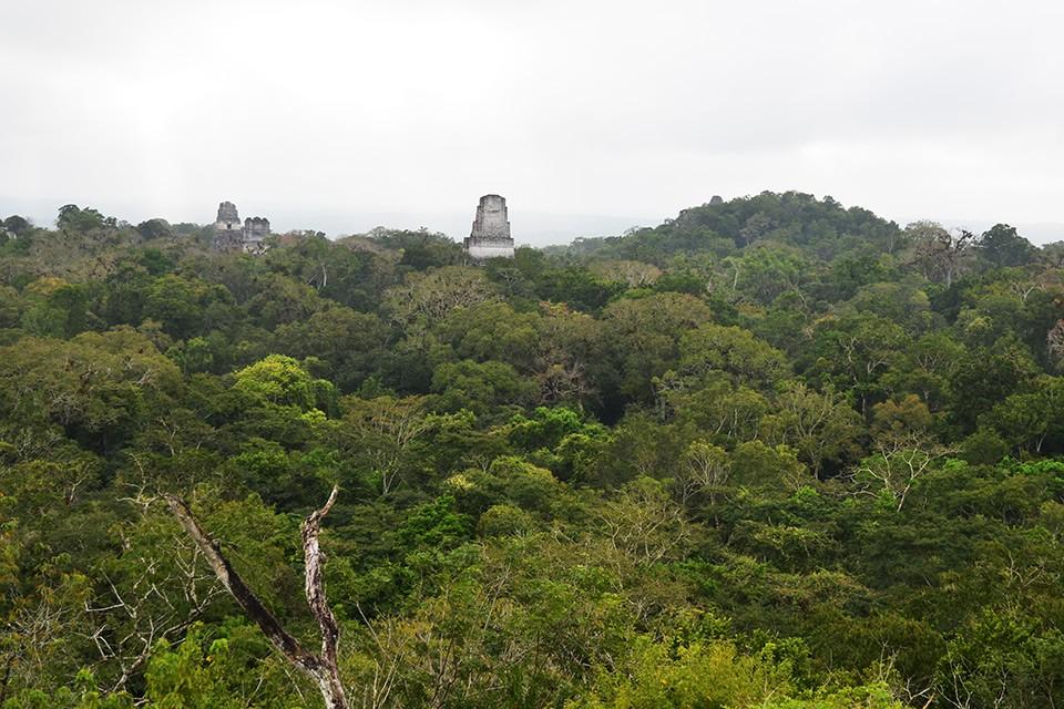 Die Maya-Ruine Tikal im Dschungel von Guatemala – Pyramiden, Tempel & Urwald