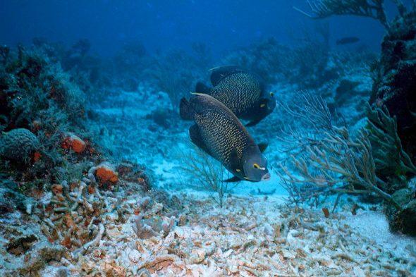 Korallenriff vor Cozumel
