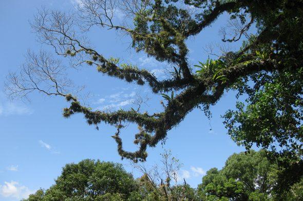 Urwald in Palenque