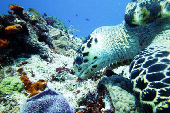 Tauchen im Wasser von Cozumel