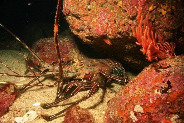 Unterwasserwelt von Coiba, Panama
