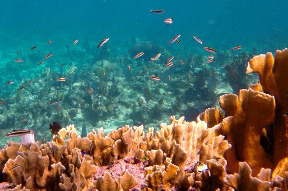 Isla de la Bahía: Roatán